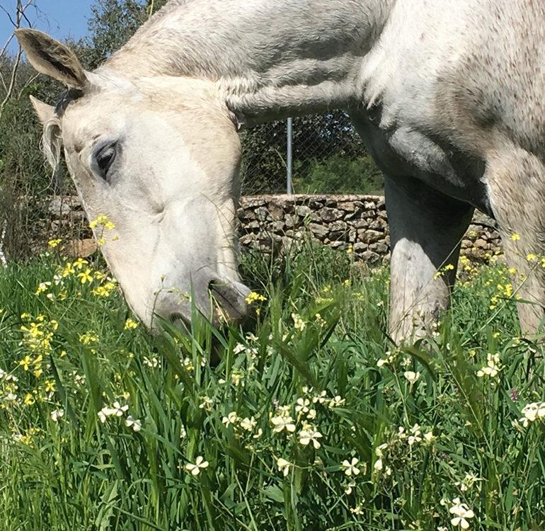 finda-descanso-caballos-02-770x750
