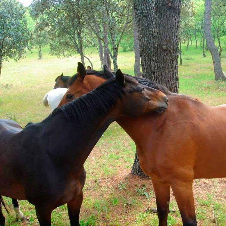 residencia-caballos-007