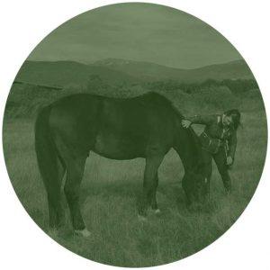 residencia-caballos-veterinario-001